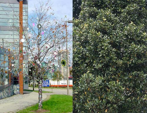 shiny trees 5 Strange Stop Gap Solutions to Climate Problems