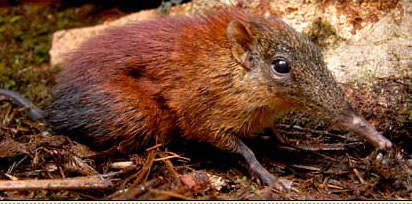 Rare New Mammal Species Discovered