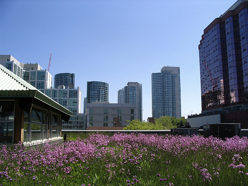Green roofs minimize storm water management, reduce energy costs, and benefit the environment.  Photo by 416Style