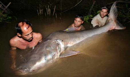 giant-catfish.jpg