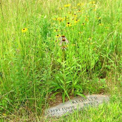Photo by Ramsey Creek Preserve