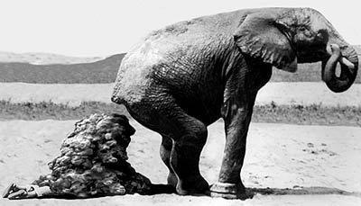 elephant_poop